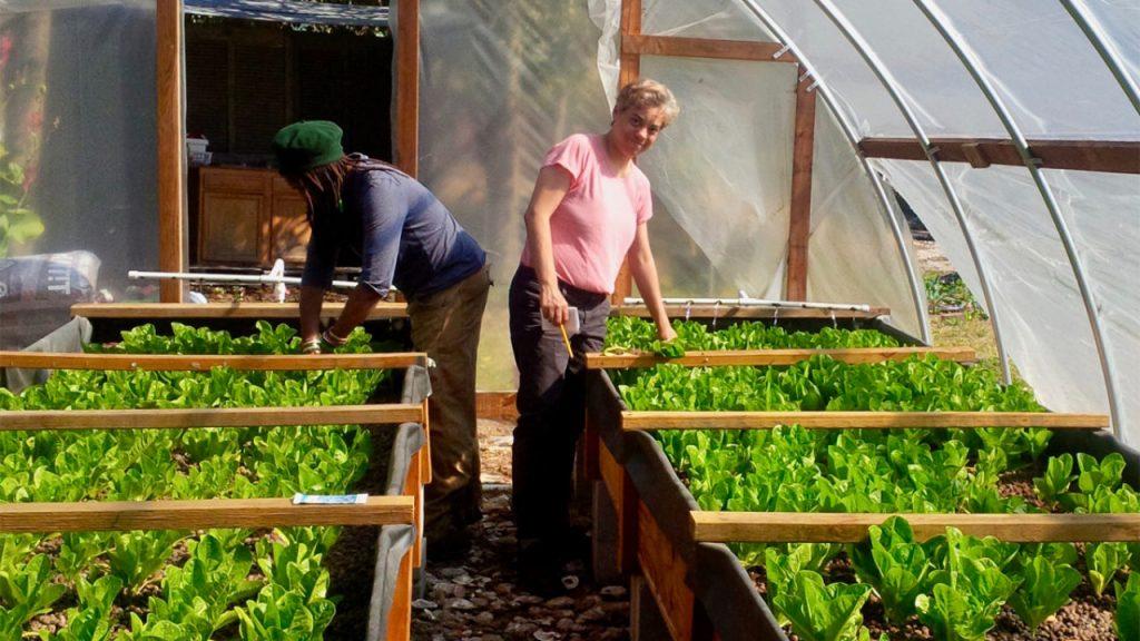 Benefits Of Aquaponic Farming